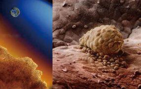 子宮の中の胚